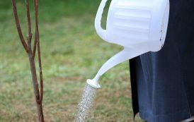 درختکاری در آیینه روایات: